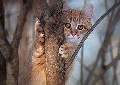 Free cougar cub dating kotka