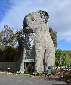 Buildings Shaped Like Animals: The Giant Koala at Dadswells Bridge, near Grampians National Park.