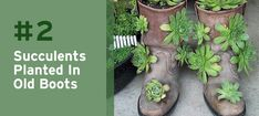 How charming is this old boot with succulents? It's such a creative and unique upcycle planter!