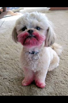 ¨It wasn't me¨. My mom's friends dog after he was caught eating lipstick.