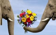 love cute adorable Black and White elephant animal flowers elephants fake Valentine bouquet black and whie two daisies animal love tusk elephant trunk elephant love Beautiful Creatures, Animals Beautiful, Cute Animals, Romantic Animals, Wild Animals, Baby Animals, Funny Animals, Elephant Love, Funny Elephant
