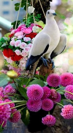 Bird and flowers. Wallpaper Nature Flowers, Beautiful Flowers Wallpapers, Flower Phone Wallpaper, Beautiful Rose Flowers, Beautiful Nature Wallpaper, Exotic Flowers, Beautiful Birds, Animals Beautiful, Dove Images