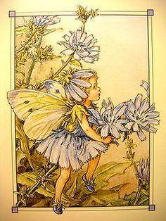 The Chicory Fairy ~ Cicely Mary Barker