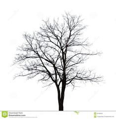 silhouette winter tree - Buscar con Google