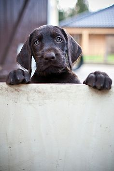 puppy | Flickr - Photo Sharing!