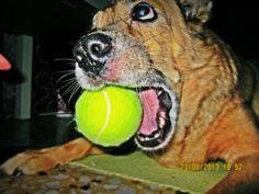 Zdjęcie - Zdjęcia Google Tennis, Google, Dogs, Sports, Animals, Sneakers, Animais, Animales, Animaux
