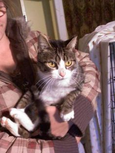 4/11/14- resharing** This little cutie is Pecan.  She is a domestic short hair tabby with the classic white muzzle/chest and feet.  She's young yet, about 9 months old. Really sweet little kitty!