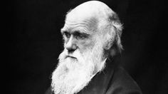 How the pseudoscience of Social Darwinism nearly destroyed humanity