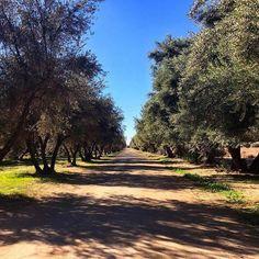 Caminar por grandes caminos llenos de arboles y naturaleza es muy común en Valle De Guadalupe! Vive tu aventura en #Ensenada! Aventura por bajawinefood