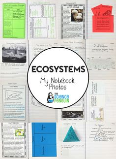 Photos from my interactive science notebook: abiotic and biotic factors in ecosystems and food webs