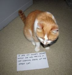 "cat shaming  ""I ate my owner's dessert while she was taking a cat-shaming photo of the other cat."""