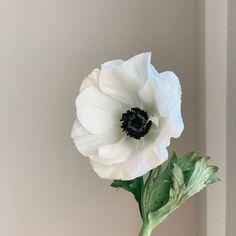 White Anemone Flower, Flower Vintage, Flower Photos, Tulips, Floral, Dreams, Plants, Porcelain Ceramics, Pintura