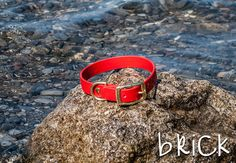 Waterproof Dog Collar in Bright Red