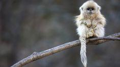 Cute Monkeys   #pets #monkey