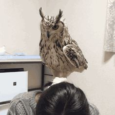 Lydia Anneli Bleth: Bengalenuhu - Bengal Eagle Owl                    ...