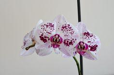 Primitive Bedroom, Primitive Homes, Primitive Kitchen, Country Primitive, Primitive Decor, Rustic Cabin Decor, Country Farmhouse Decor, Italian Interior Design, Types Of Orchids