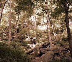 Inwood Hill Park. Eneste område i New York med den oprindelige natur.