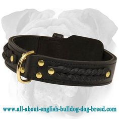 Braided And Studded #Leather #Collar for #English #Bulldogs $49.90 | www.all-about-english-bulldog-dog-breed.com