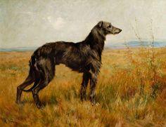 Portrait of a Deerhound, Champion Earl II by Arthur Wardle Date painted: 1896