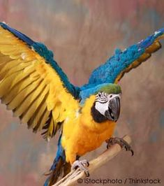 Clipping a bird's wings has more benefits than drawbacks and is an individual decision for the pet owner.