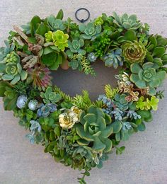 "SUCCULENT WREATH - Beautiful Succulent living wreath approx. 11""."
