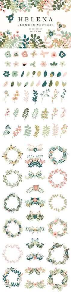 Helena -Flowers Vectors by Cliche Graphique on @creativemarket $15 standard license, $150 extended license