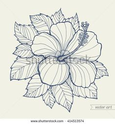8 Best Hibiscus Flower Drawing Images In 2016 Hibiscus Flower