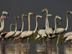 Nal Sarovar Bird Sanctuary - in Gujarat, India