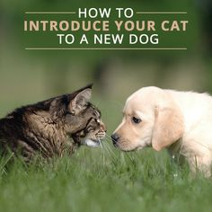 With time and patience, your cat and new dog will be getting along just fine.
