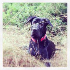 Good looking boy #dogs