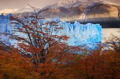 perito moreno,autumn,otono,fall,ice,lenga,lire,sunrise,glacier,patagonia,el calafate