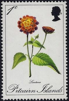 Buy and sell stamps from Pitcairn-Islands. Meet other stamp collectors interested in Pitcairn-Islands stamps. Lantana Camara, Valley Of Flowers, Sell Stamps, British Indian Ocean Territory, Stamp Catalogue, Pitcairn Islands, Flower Stamp, Vintage Stamps, Mail Art