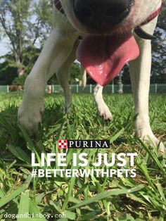 3 Ways I Pledge to Love My Dogs Better @Purina #BetterWithPets Summit 2015 #sponsored