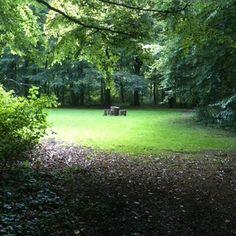 Zonnige plekjes in het bos