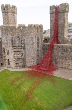 This stunning poppy display has just opened at Caernarfon Castle - Wales Online