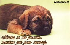 odpusť mi Psi, Weird Words, Humor, Dogs, Quotes, Animals, Quotations, Animales, Animaux