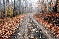 Autumn, Monongahela National Forest, West Virginia