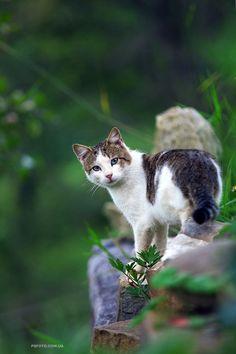 Cat  by Sergey Polyushko