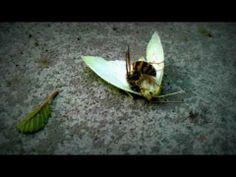 Mortal Kombat - wasp vs butterfly - YouTube