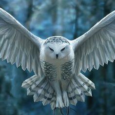 Gothic Fairy Art | Vampires Kitchen - Nemesis Now Anne Stokes Awaken your magic Cushion ... Animals Images, Nature Animals, Cute Animals, Owl Photos, Owl Pictures, Beautiful Owl, Animals Beautiful, Owl Art, Bird Art