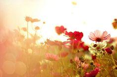 Light Leak Flowers