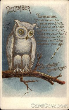 December - Snowy Owl, Turquoise born in December and I've always loved owls!