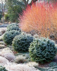 Tips to Manage the Amazing Winter Garden Landscape Winter Plants, Winter Garden, Garden Shrubs, Garden Plants, Balcony Gardening, Gardening Vegetables, Hydroponic Gardening, Vegetable Garden, Gardening