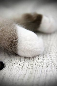 Little white mittens #paws #cat