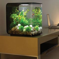Small Fish Aquarium : fish tanks on Pinterest Small Fish Tanks, Aquarium and Betta Fish ...
