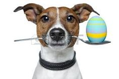 a húsvét kutyája