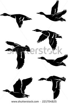 Vector flying duck Free vector for free download about (10) Free ...