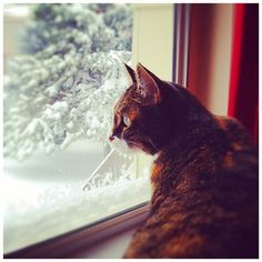My Suki checking out the snowstorm yesterday.