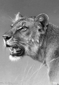 Coloring for adults - Kleuren voor volwassenen Animal Pencil Drawings, Pencil Sketches Of Animals, Bird Drawings, Realistic Sketch, Realistic Drawings Of Animals, Drawing Animals, Lion Drawing, Drawing Art, Big Cats Art