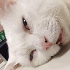 Cat Brain Loading [gif]